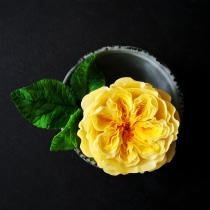 Yellow David Austin Rose