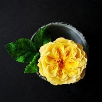 Yellow David Austin Rose